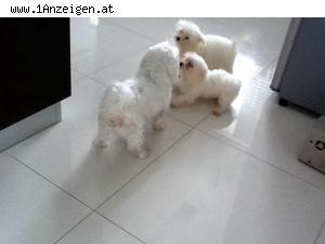 Hundesexgeschichten Die Hündin